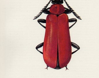 1960's Red Beetle Lithograph - Vintage Red Bug Print