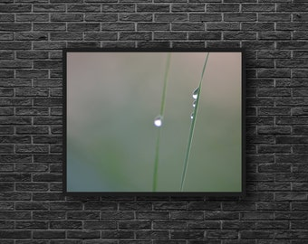 Water Drops Photo - Green Photography - Minimalist Photo - Grass - Botanical Wall Decor - Green Wall Art - Zen Photo - Feng Shui Wall Decor