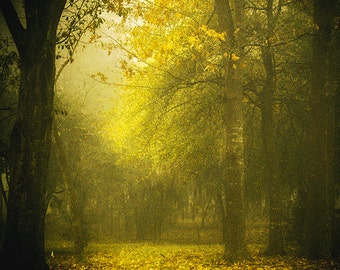 Fall Photography, Autumn Tree Photo, Nature Photography, Fall Foliage, Soft Light, Yellow Leaves, Forest, Woods, Fine Art Photography