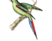 Parrot Download - Red-Shouldered Parakeet  - Clip Art - Wall Art - Collage Art - Craft - Print - DIY - PNG - Card Making - Scrapbook - A213