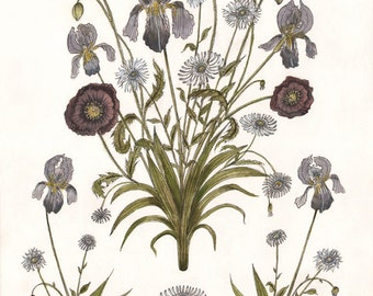Iris, Poppy, and Daisy - Print