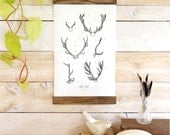 ON SALE Antler Study Vol.2 - Mini wall hanging, wood trim and printed on textured cotton canvas. Vintage Science Posters
