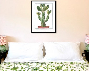 Tanzanian Cactus reproduction antique botanical print botanical art botanical illustration botanical giclee wall art home decor cactus print