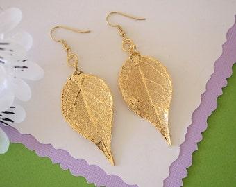 Gold Leaf Earrings, Evergreen Leaf , Real Leaf Earrings, Real Gold Evergreen Leaf, Gold, Nature, LEP60
