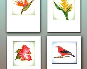 Hawaiian note cards, tropical stationary,bird of paradise, hibiscus, yellow ginger, scarlet Hawaiian honeycreeper, ʻiʻiwi Drepanis coccinea