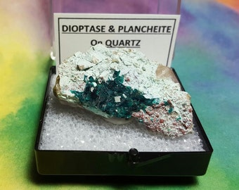 SALE Rare DIOPTASE And Plancheite On Quartz Natural Bright Teal Blue Green Crystal Mineral Specimen In Larger Size Display Box From Namibia