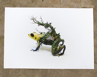 the mimic - dart frog - Original Giclee Edition Print - 13x19""