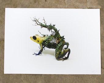 "the mimic - dart frog - Original Giclee Edition Print - 13x19"""