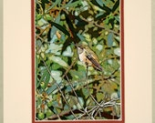 Hummingbird Art - Matted Altered Photo Your Choice of Sizes, Photographic Art Print, Bird Wall Decor, Nature Matted Print, Woodland Image