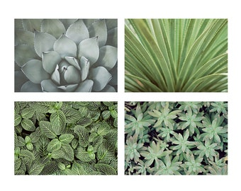 Nature Photography Set of 4 Prints - 5x7 Prints - Succulent Agave Cactus Leaves Greenhouse Green Art - Fine Art Photography