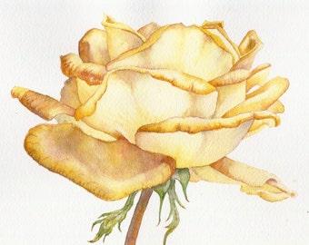 Original watercolour rose painting ~ Glowing yellow rose