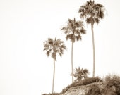 High On A Sand Dune - Sepia Fine Art Photography Print - Palm Trees Art Print - Large Wall Art - California Wall Decor - FREE SHIPPING