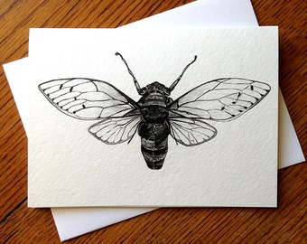 Cicada, Insect, Wings, Bug, 5 x 7 Black and White Illustrated Blank Card, Entomology