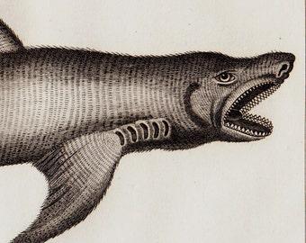Antique print, 1832 Antique SHARK engraving, shark species, dogfish, Original antique print, big fish