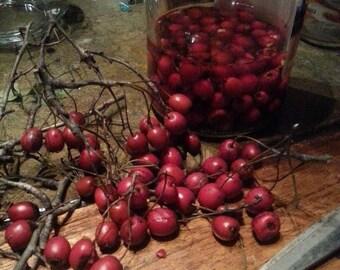 Hawthorn Berry tincture