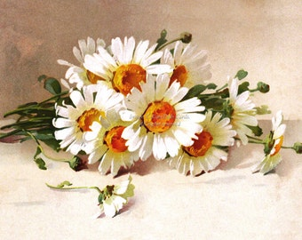 Daisies Greeting Card | Flowers Notecard | Option Matching Sticker