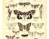 Butterflies and Moths Antique Book Plate Print 1878 - Vintage Book Illustration Home Decor, Nature,Entomology, Collage, Art, Craft Supplies