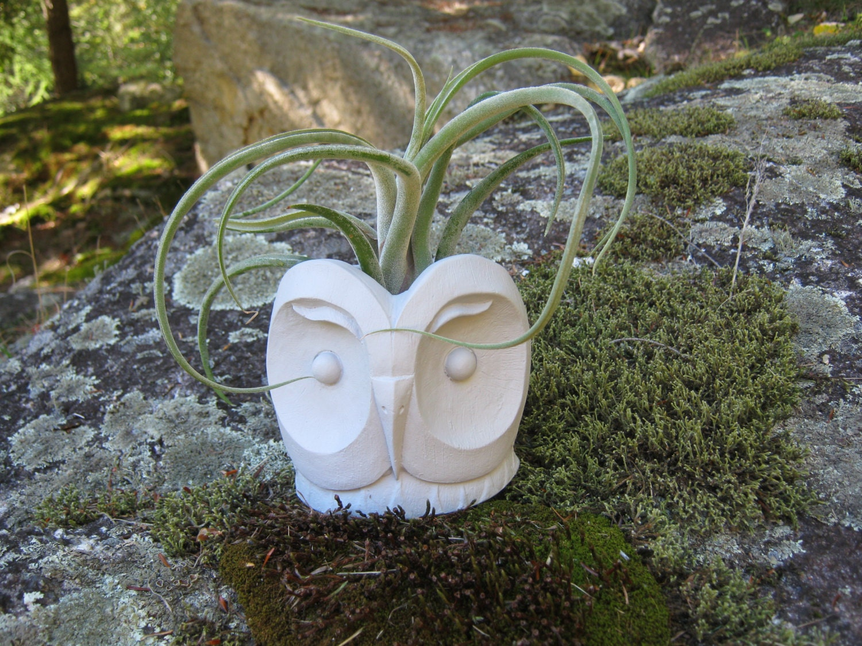 Concrete Planter Succulent Plant Pot Owl Themed Plant Pots