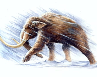 "Mammoth in Snow 8.5""x11"" print"