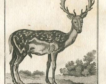 1800s Male Fallow Deer Antique Print,  Le Daim, Buffon