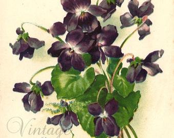 Purple Violets Antique French Chromo Postcard Chromolithograph from Vintage Paper Attic