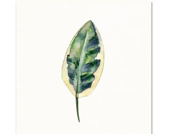 Watercolor Botanical Art Print / Botanical Painting / Watercolor leaf / House Plant Art / Nature Wall Art / Nature Painting / Kitchen Art