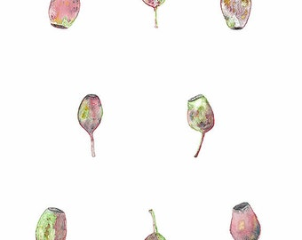 Watercolour Gumnuts, Native Plant Art, Nature Illustration, Australian Seller, Botanical Print, Flora Wall Decor
