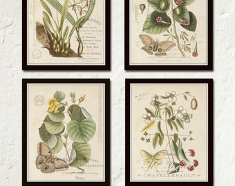 Vintage Butterfly and Botanical Print Set No.1 - Giclee Canvas Prints, Antique Botanical Prints, Wall Art, Prints, Posters, Butterfly Prints