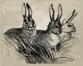 Three rabbits Instant digital download image for iron on fabric transfer burlap decoupage scrapbooks pillows cards totes No gt152