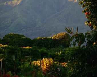 lush green - fine art photograph - hawaii photography - tropical photo - home wall art - large wall art - fine art photography - nature