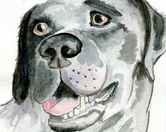 Pet portraits - raising funds for Freedom From Torture