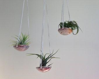 air plant hanging planter / air plant holder / sgraffito design