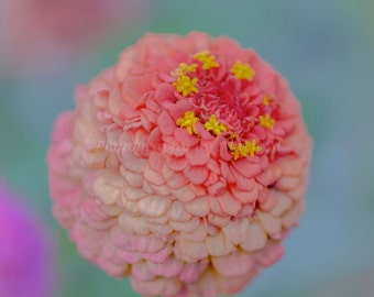 Be Happy, nature photography, floral, flower, autumn flower, pink, wall hanging, home decor, Affirmation, text