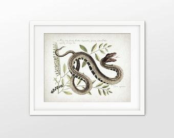 Pit Viper Snake Art Print - Antique Snake Illustration Print - Snake Decor - Reptile Art - Single Print #1660 - INSTANT DOWNLOAD