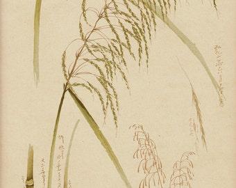 1888 Japanese art old print. Bamboo