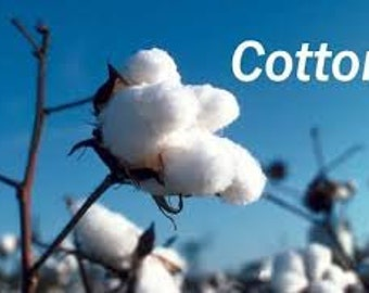 200gms Australian Super Ginned Cotton for Spinners and Craftspeople