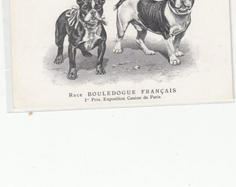 First Prize Exposition Canine Paris Original Old C 1910  Postcard French Bulldog, L'Acclimatation,Unuseed