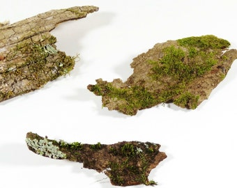 Three Large Pieces of Tree Bark, With Lichen, Moss, and Tree Fungus, Terrarium Decoration and Florist's Supply