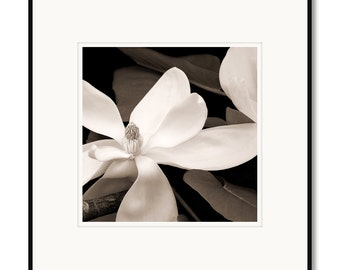 Black and white photography, Magnolia flower blossom, limited edition fine art photograph, sepia warm tone, framed, floral art, Appalachian