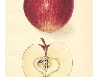 1907 Antique Apple Print Delicious Apple Lithograph