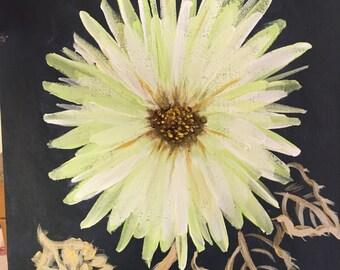 Single flower burst