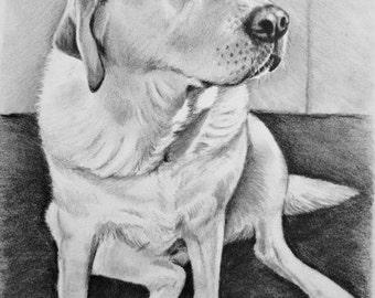 Custom Pet Portrait Graphite Pencil 11x14