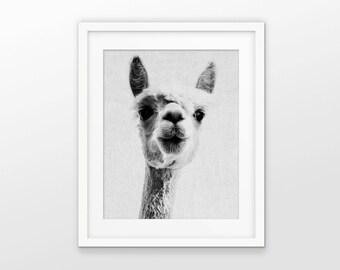 Lama Art Print - Black And White Grayscale Art - Lama Print - Lama Wall Art - White Linen Effect Photo Collage - INSTANT DOWNLOAD #2383