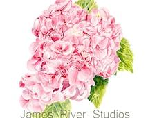 Hydrangea Painting Hydrangea Print Hydrangea Art Hydrangea Watercolor Hydrangea Wall Art Hydrangea Decor Pink Hydrangea Pink Hydrangea Art.