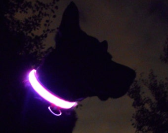 Light up LED dog collar; pink, green, yellow, orange, red, white, or blue; lighted glow safety pet collar lights up in dark; S, M, L