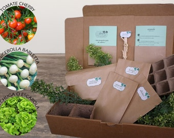 Kit Classic Salad (lettuce, minicebolla, and cherry tomatoes). Everything you need to grow your traditional salad.