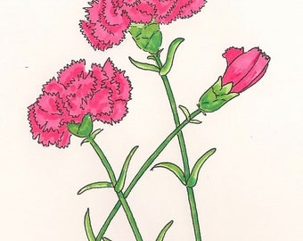 Pink Carnation Cards - Suitable for Framing!  Set of 8 Cards