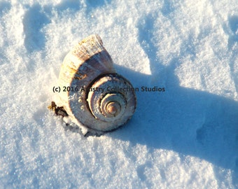 The Seashell in Snow