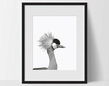 Art Print, Bird Art, Bird Printable, Digital Print, Bird Print, Wall Art, 8x10, Decorations, Bird, Black and White, Art