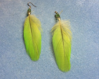Bright lime green Amazon parrot feather earrings adorned with green Czech glass beads.